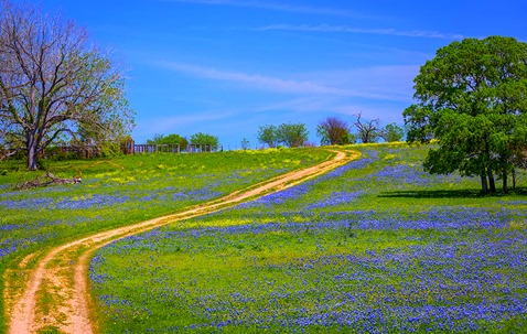 Springtime in the Hill Country