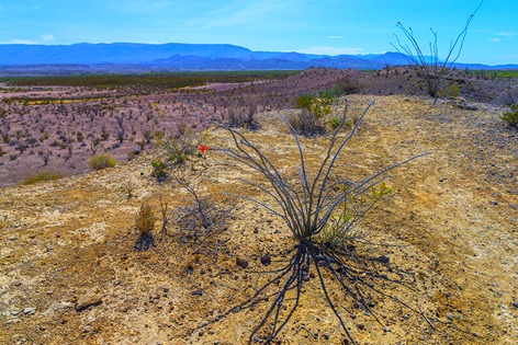 Ocotillo and Chihuahuan Desert Scenery