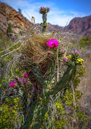 Nest In The Cholla View 3
