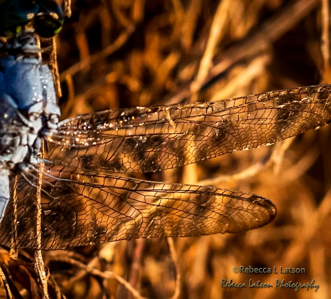On Gossamer Wings