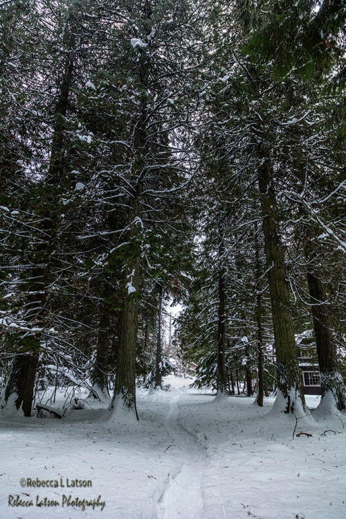 n6a1458_snow-path-through-the-tall-trees