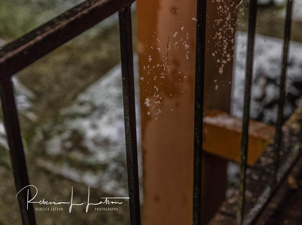 Snow On The Spiderwebs
