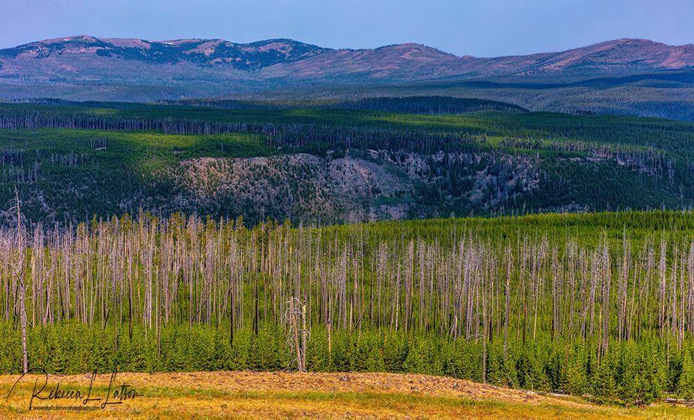 Yellowstone Layers