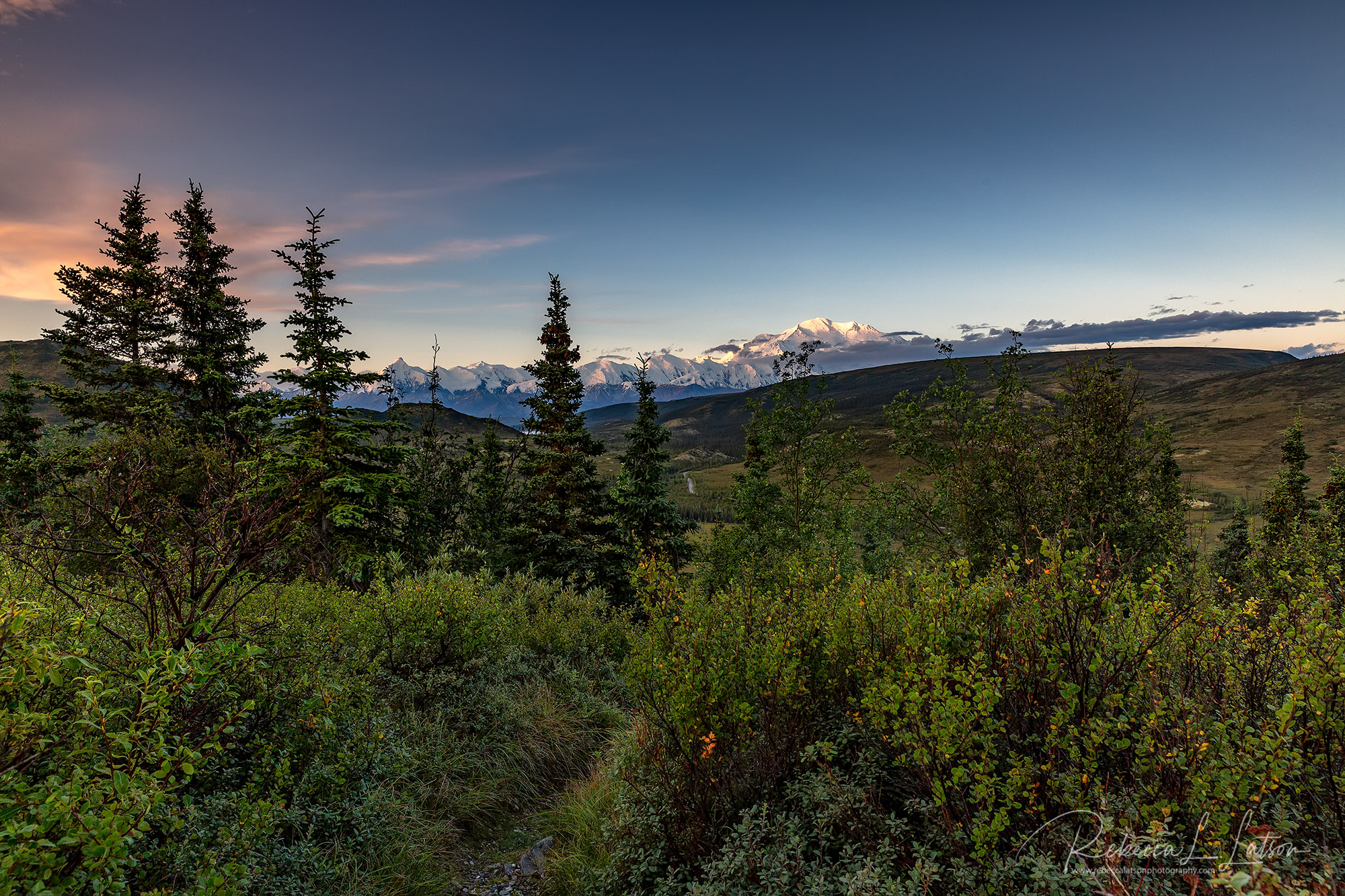Early Morning In Denali