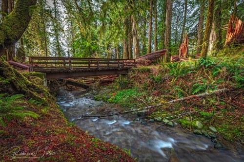 The Bridge Over July Creek