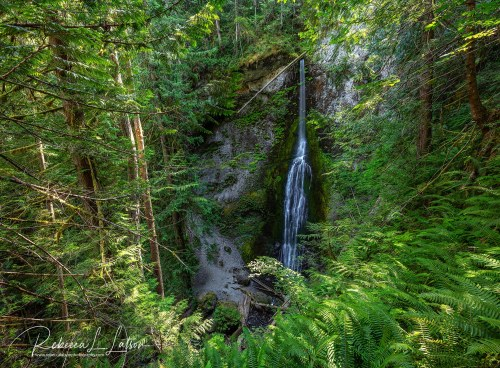 Marymere Falls Framed By Ferns