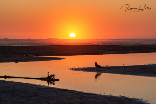 A Kalaloch Beach Sunset