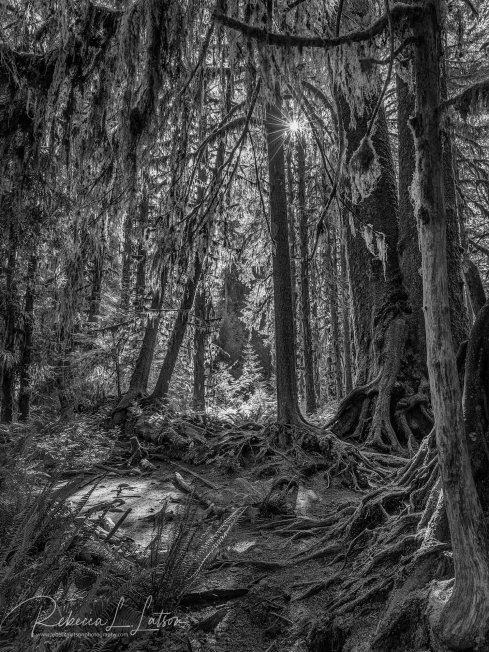 Shapes And Colors In The Rain Forest BW