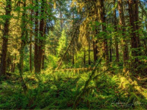 Hall Of Mosses Trail Scenery - Darker