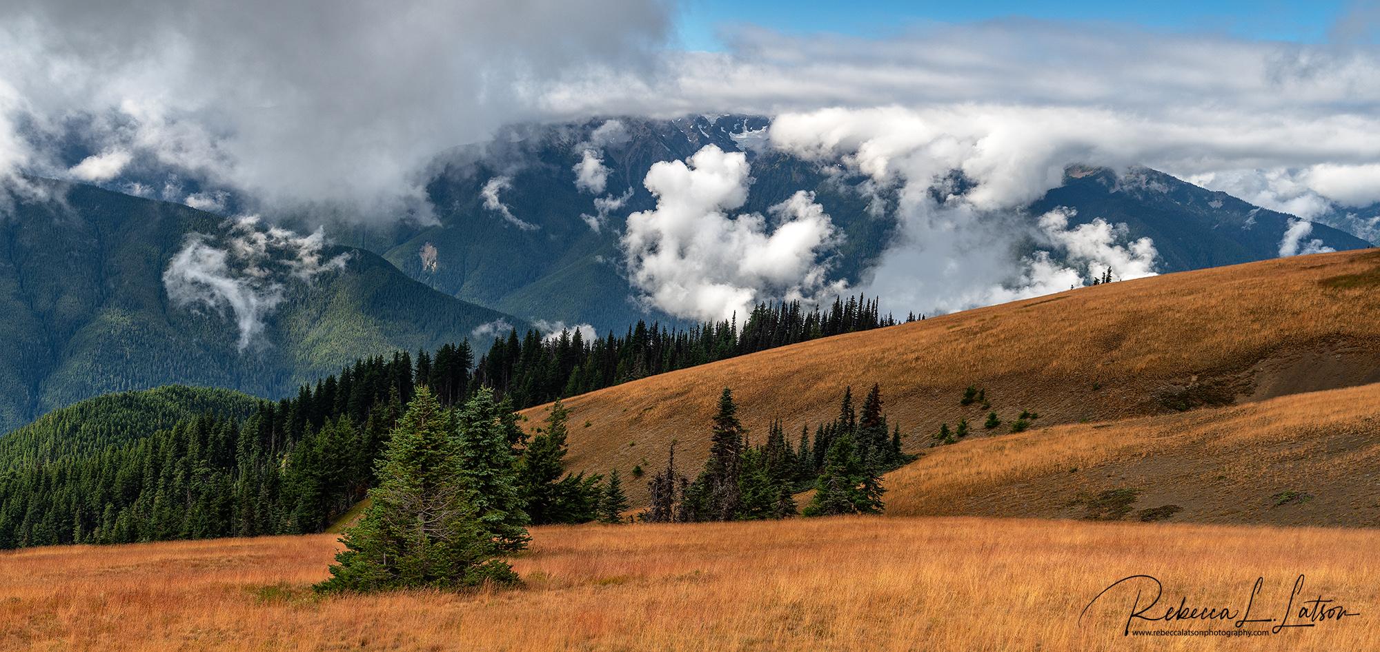 Hurricane Ridge Landscape Pano