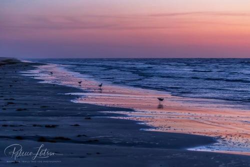 Dawn Along The Seashore