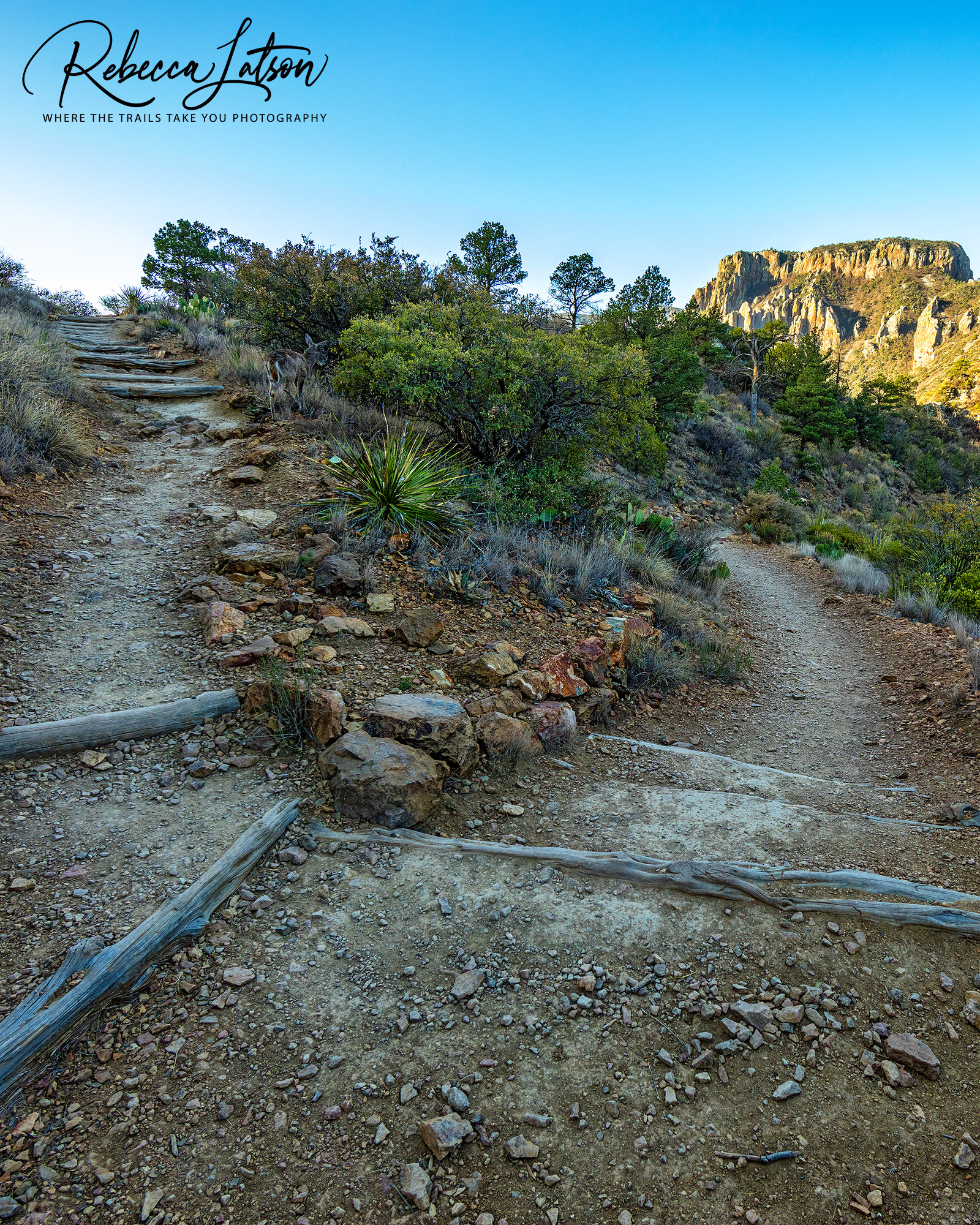 Lost Mine Trail - 14mm