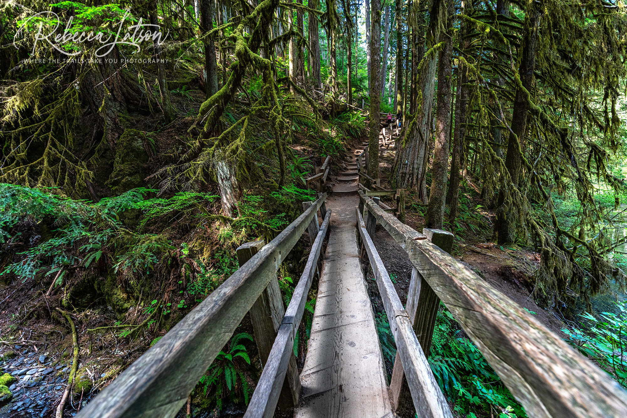 Over The Bridge And Up The Trail To Marymere Falls