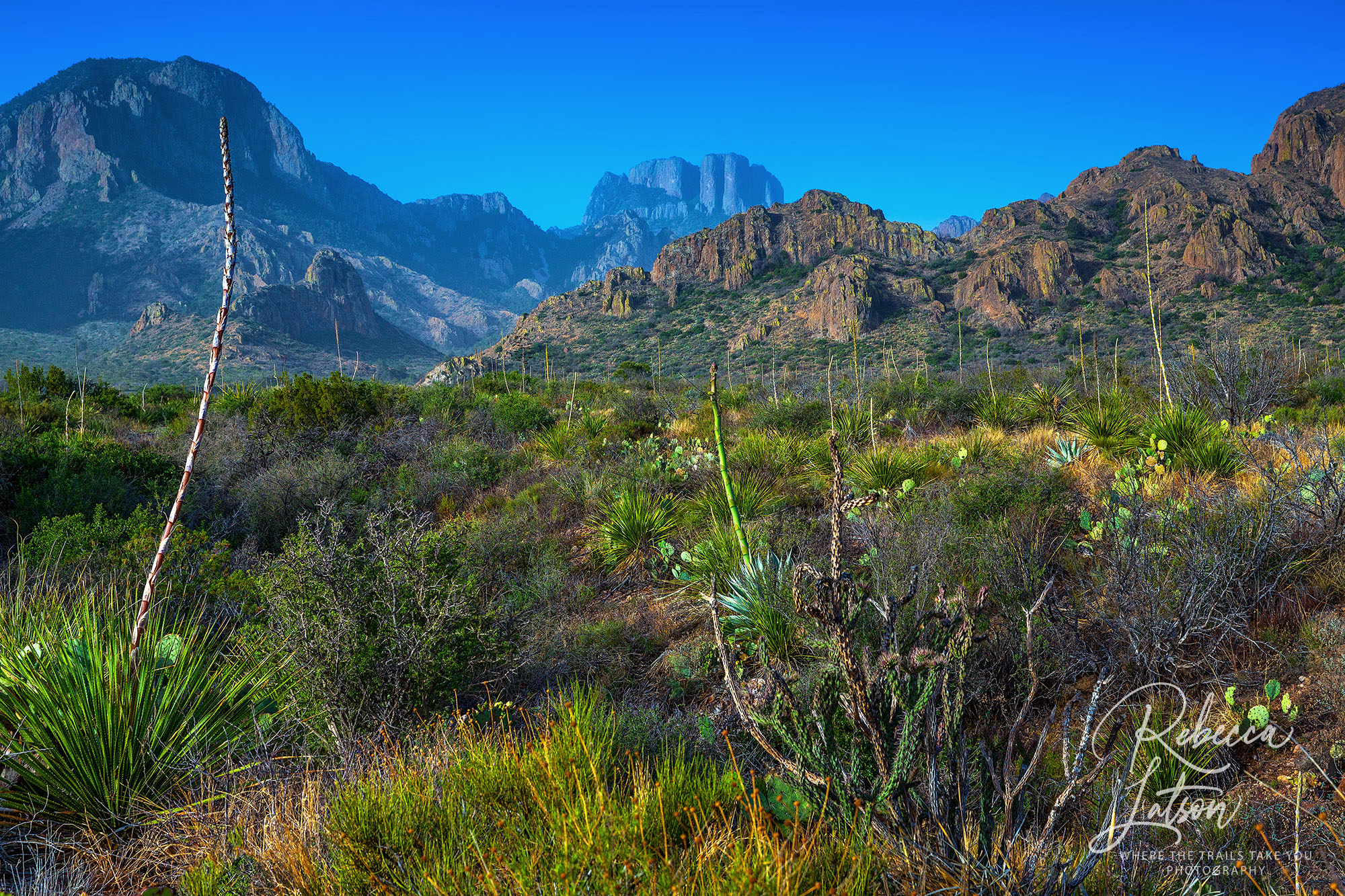 Morning View of Big Bend Scenery