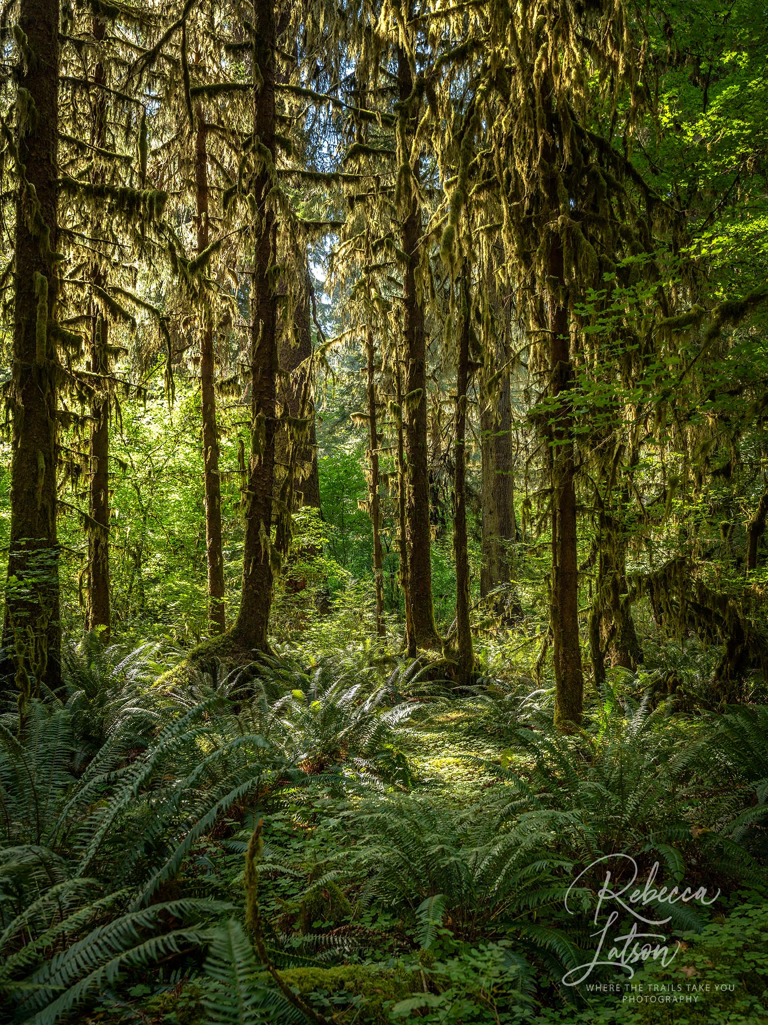 Hoh Rainforest Scenery