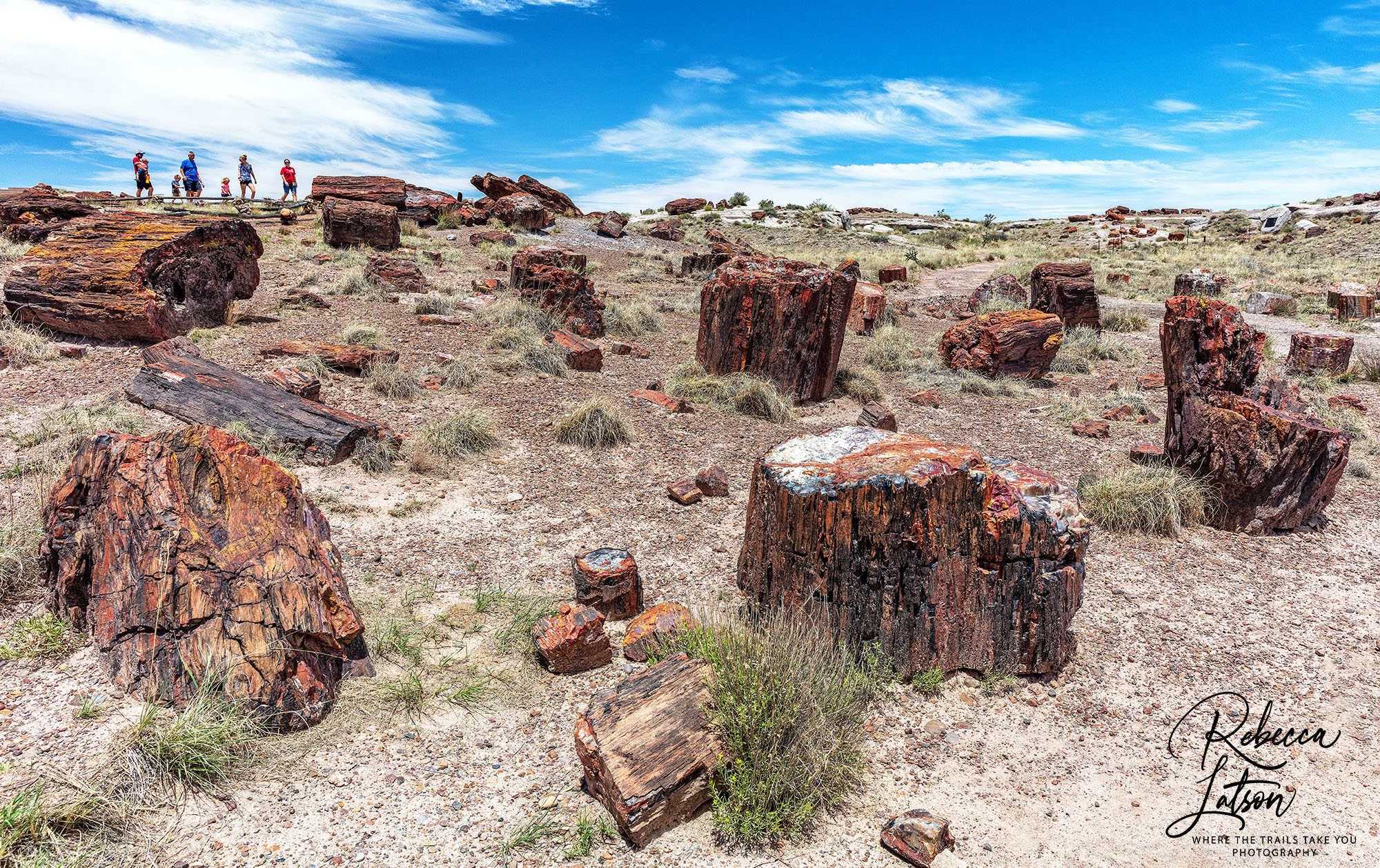 Petrified Logs Along The Crystal Forest Trail