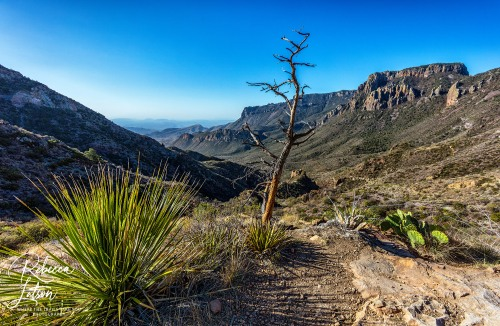The View Along Lost Mine Trail - 14mm