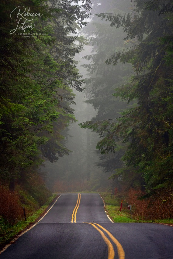 The Road Through The Rain Forest