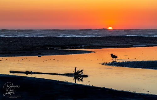 Sunset And Silhouettes On Kalaloch Beach