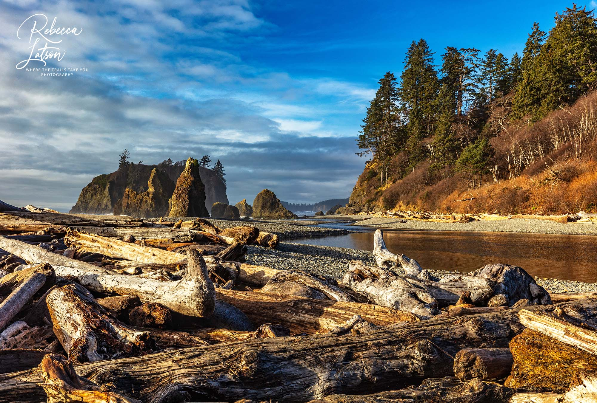 Ruby Beach Logjam